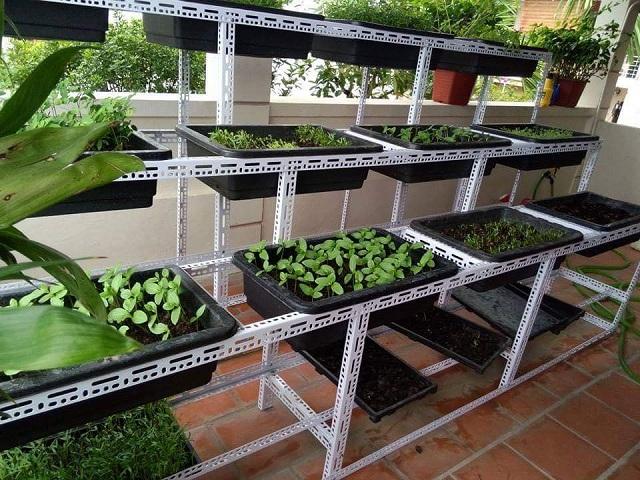 Kệ trồng rau sạch tại nhà